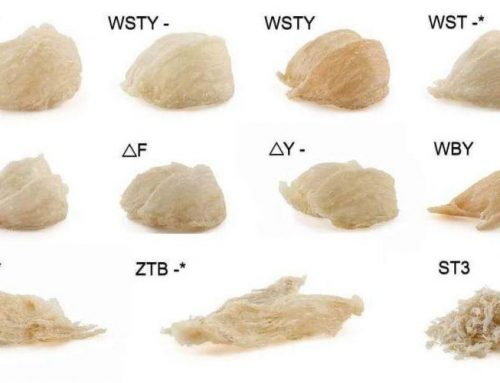 Classification of Bird's Nest